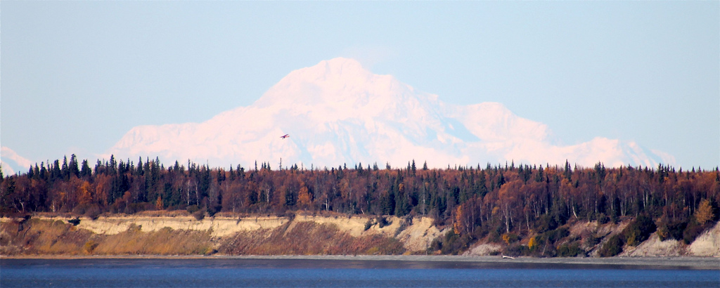 Denali in the distance over taiga in fall